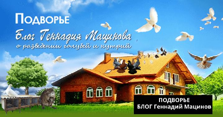 Подворье блог Геннадий Мацинов